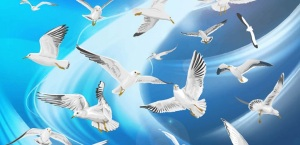 Many-flying-seagulls-blue-sky.