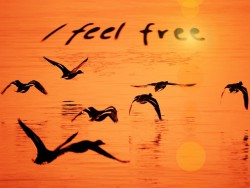 Seagulls-over-water-orange-sunset-I-feel-free.